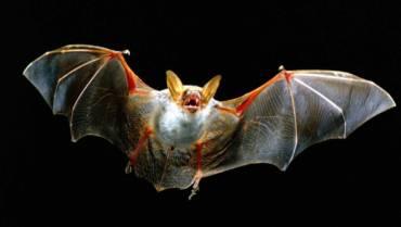 Corso sui Pipistrelli